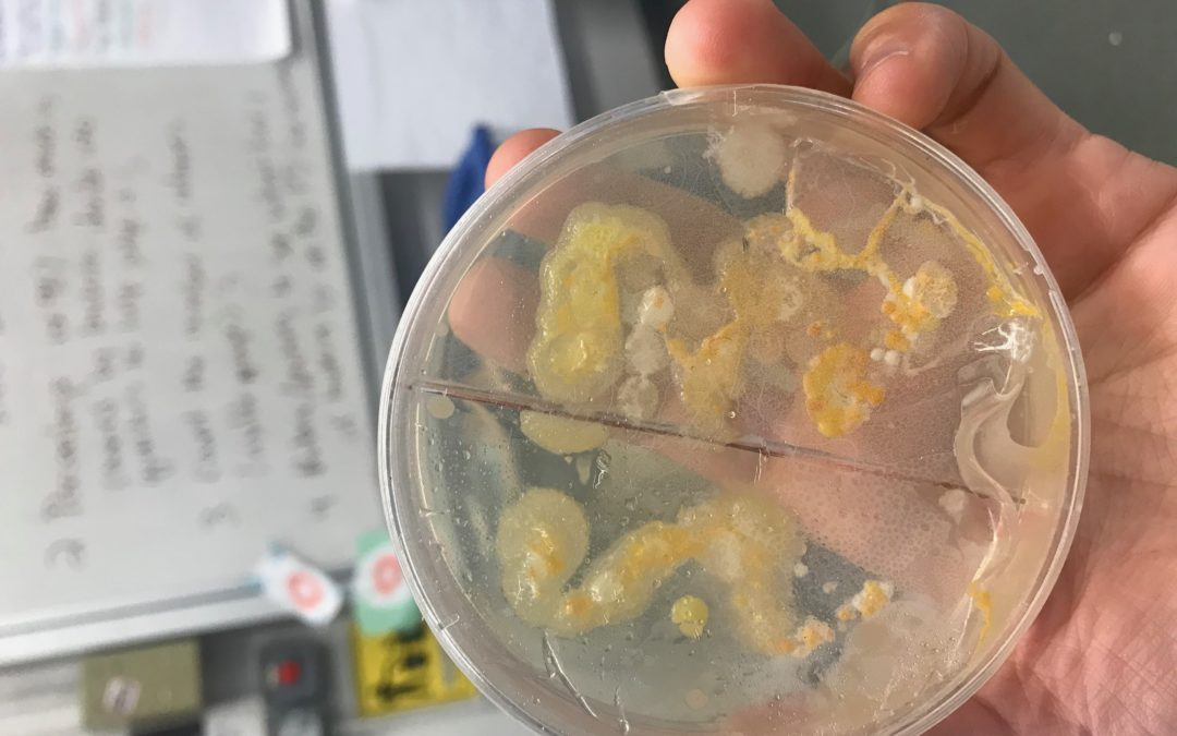Meaningful Microbes